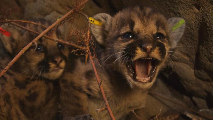p39-kittens
